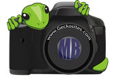 geckosites-dot-com-photography-logo